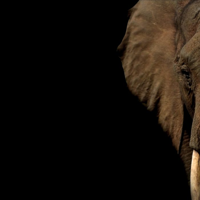 What My Inner Elephant Taught Me…