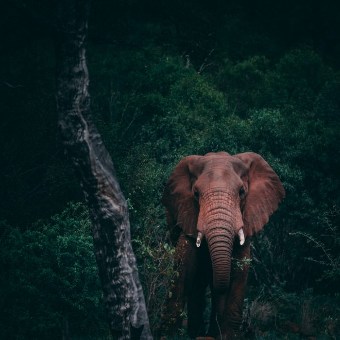 The Most Valuable Lesson From an Elephant